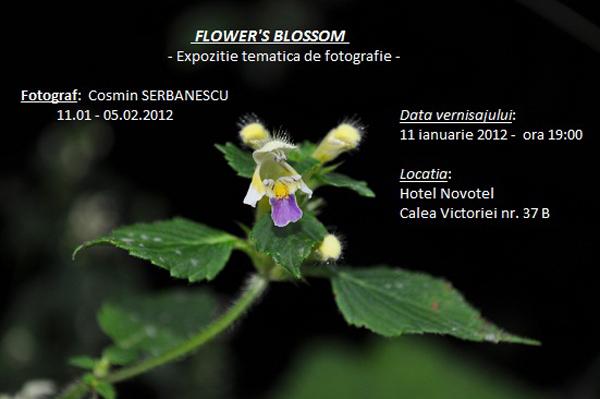 """Cosmin Șebănescu, """"FLOWER'S BLOSSOM"""", expoziție de fotografie @ Novotel, București"""
