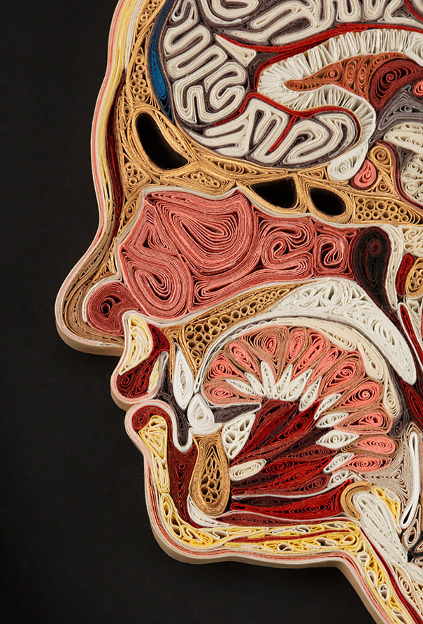 Anatomical Cross-Sections Made of Rolled Paper by Lisa Nilsson