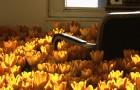 bloom-28000-flowers-anna-schuleit-thumb640