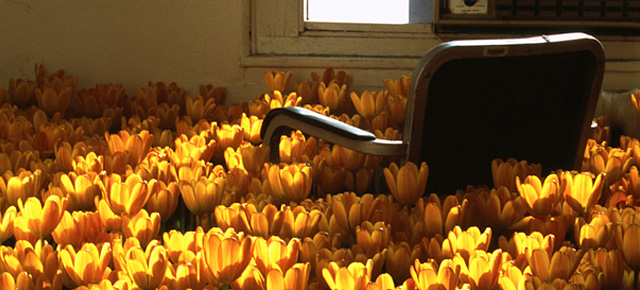 Bloom: 28,000 Flowers Installed At The Abandoned Mental Institution