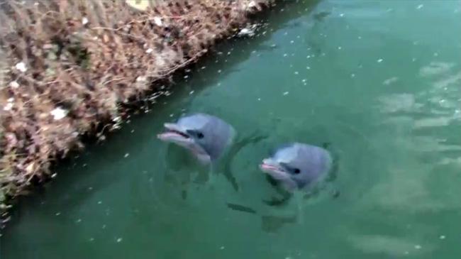 Delfini maidanezi în Dâmbovița!! (cu moldoveni)