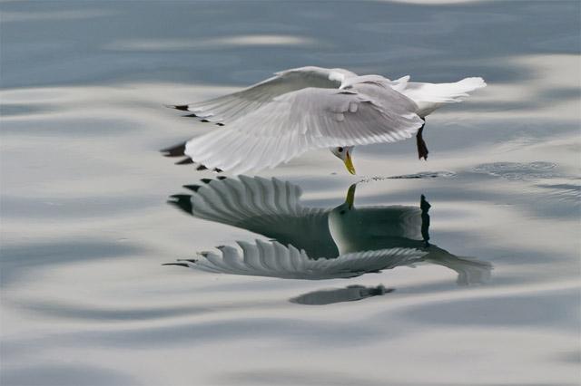 A Bird's Mirror