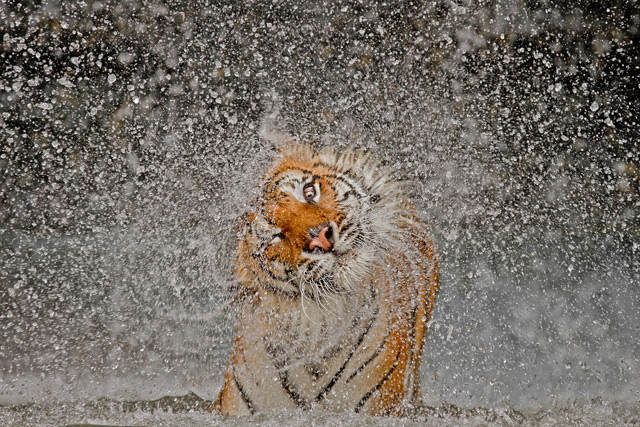 Winners & Honorable Mentions of the 2012 National Geographic Photography Competition