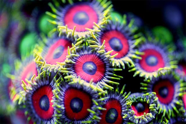 Vibrant Macro Photographs of Coral by Felix Salazar
