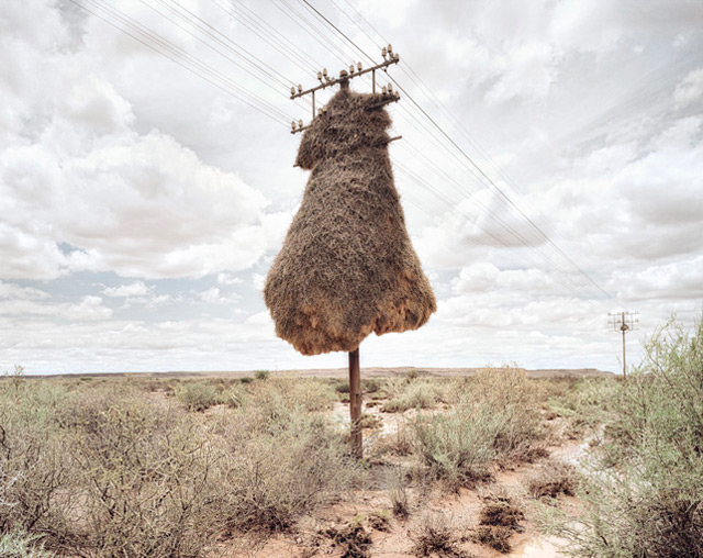 Bird Nests Hanging on a Telephone Pole in Africa