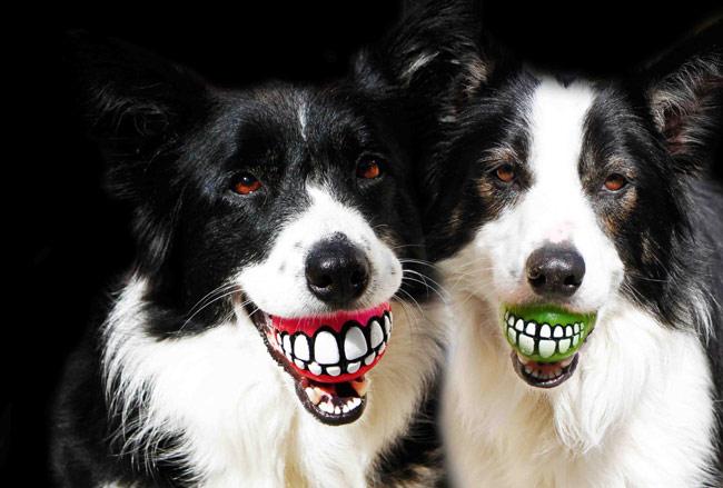 Rogz Grinz Treat Ball Dog Toy