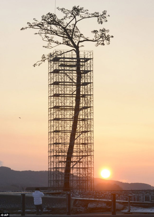 Massive Sculpture of the Last Standing Tree from a Forest Destroyed by the 2011 Tsunami