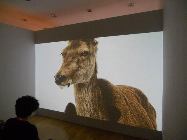 Daria GHIU  – Mircea Cantor: artă pentru un an
