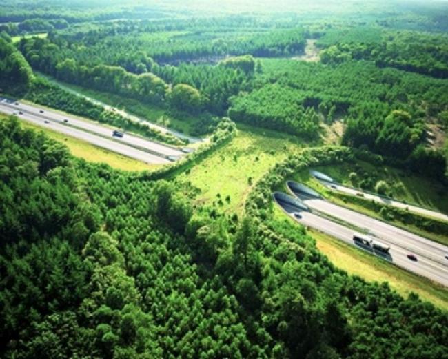 Poduri destinate exclusiv animalelor