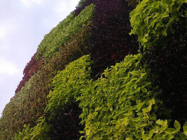 Resize of 21-arhitectura botanica