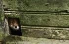abandoned-house-animals-kai-fagerstrom-10
