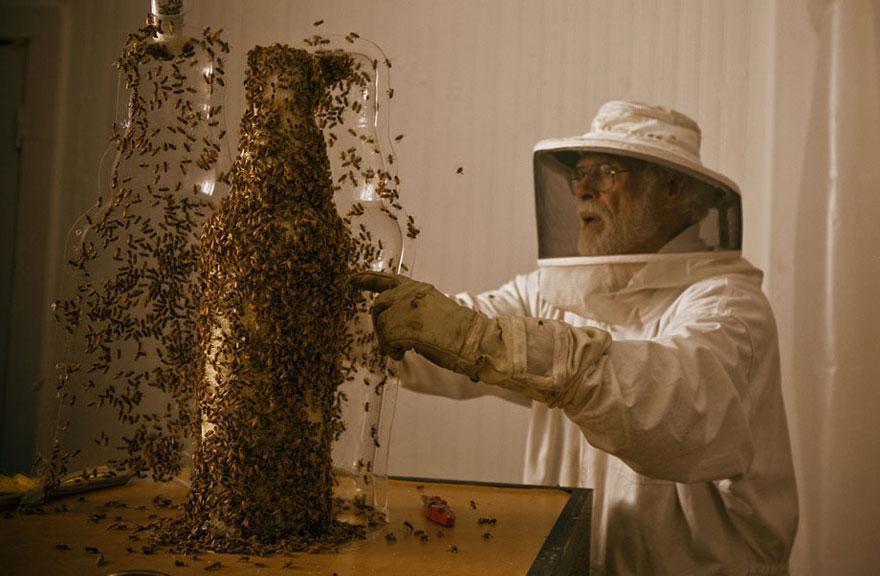 Amazing 3D Sculptures Built by Bees
