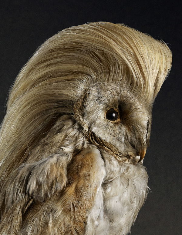 Coiffure le Bird, Portraits of Birds with Stylish Hairdos