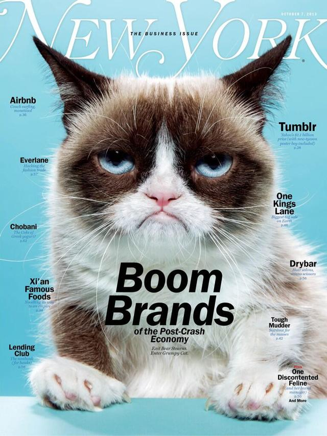 Grumpy Cat on the Cover of New York Magazine