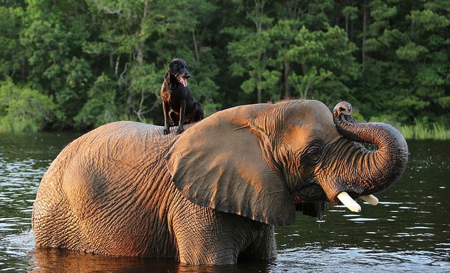elephant-dog-friendship-bubbles-and-bella-7