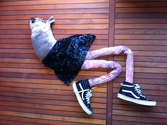 Hilarious Photos of Cats Wearing Tights by Meowtfit