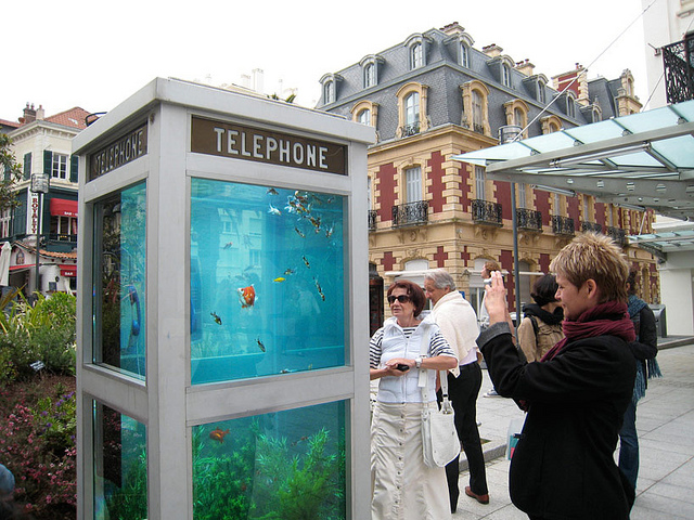 Phone Booths Converted into Outdoor Fish Aquariums (3)
