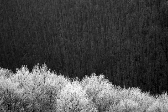 Griurile iernii