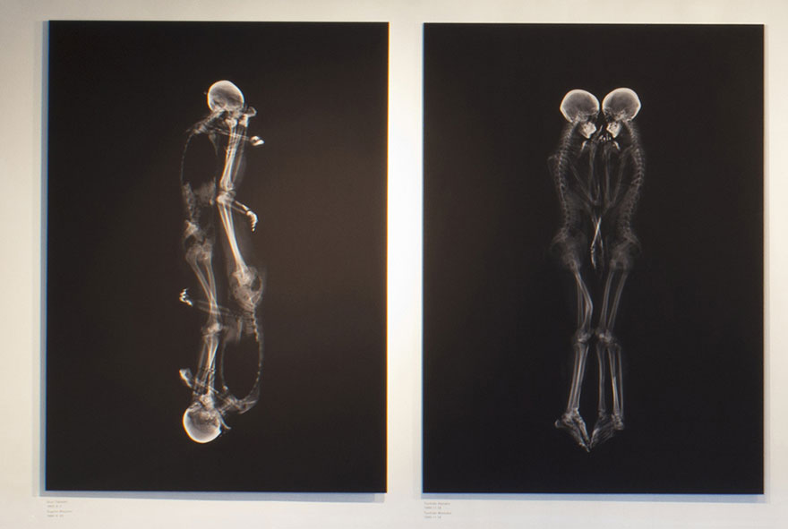 Intimate X-Ray Portraits of Couples by Ayako Kanda and Mayuka Hayashi