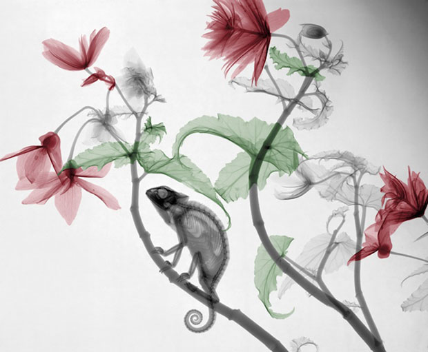 X-Ray Photographs of Plants and Animals