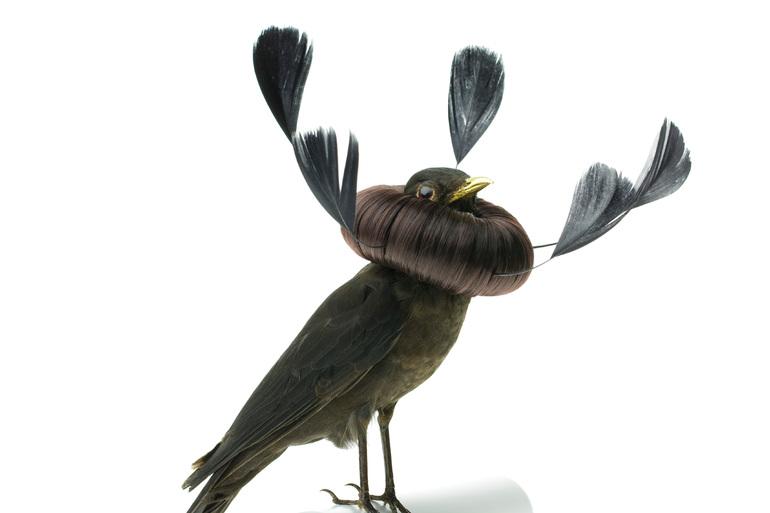 Taxidermy Bird Sculptures (10)