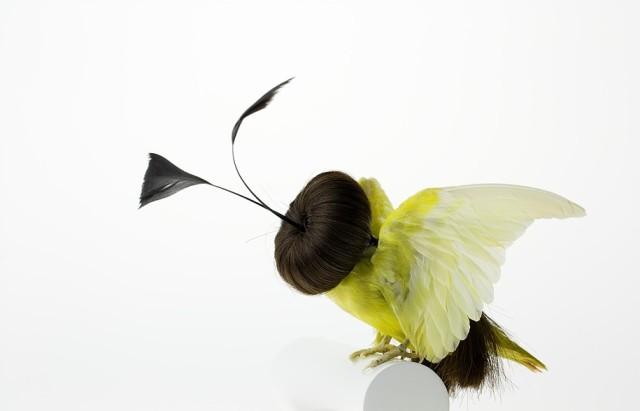 Taxidermy Bird Sculptures (4)