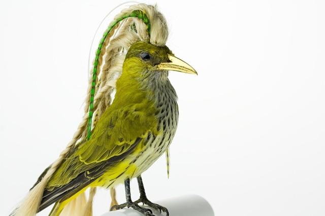 Taxidermy Bird Sculptures (5)