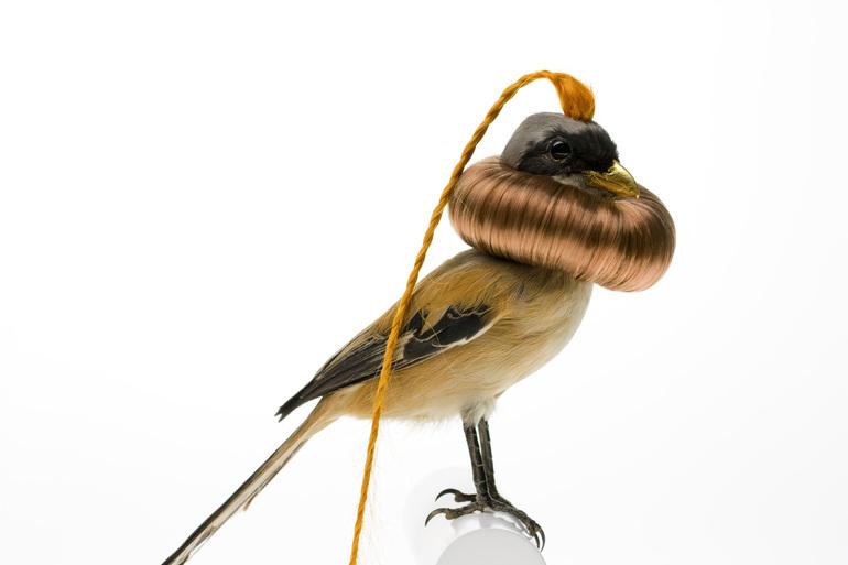 Taxidermy Bird Sculptures (7)