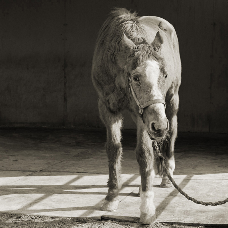 Heartbreaking, Beautiful Images Of Elderly Animals