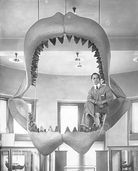 Vintage Behind The Scenes Photos Of The American Museum Of Natural History