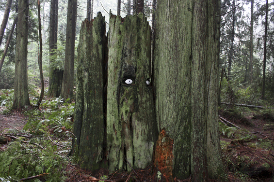 Artists Turn Giant Trees In The Forest Into Humorous Watchful Faces