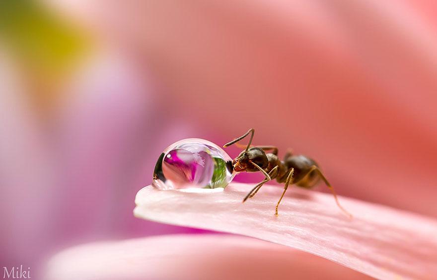 Hidden Macro World Revealed By Japanese Photographer Miki Asai