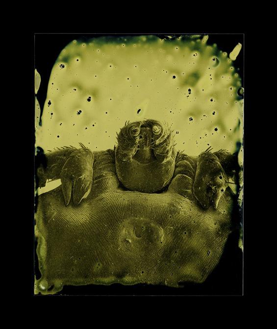 Marcus DeSieno's Beautiful and Terrifying Photos Of Microscopic Parasites