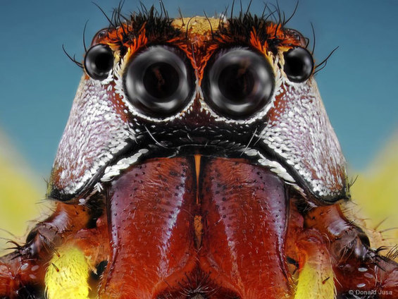 Amazing Photographs Capture The Strange Eyes And Hair Of Insects