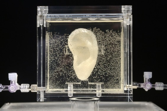 A Living Replica Of Vincent Van Gogh's Ear Grown with DNA and a 3D Printer
