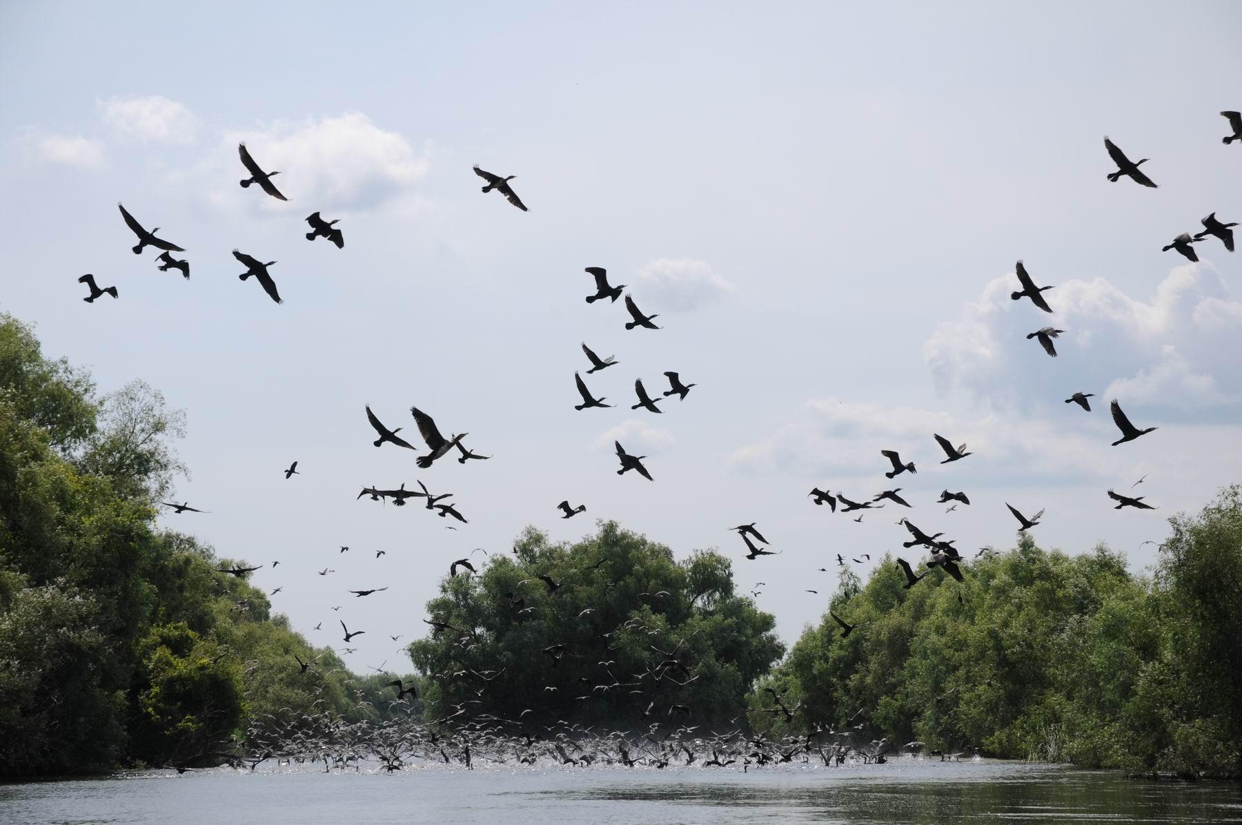 Delta Dunarii @ Pelicam