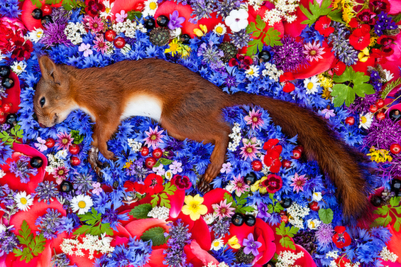 Heart-wrenching Burial Photos Of Dead Animals Abandoned On The Road