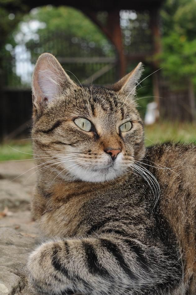 pisica - muzeul satului - foto lucian muntean _06