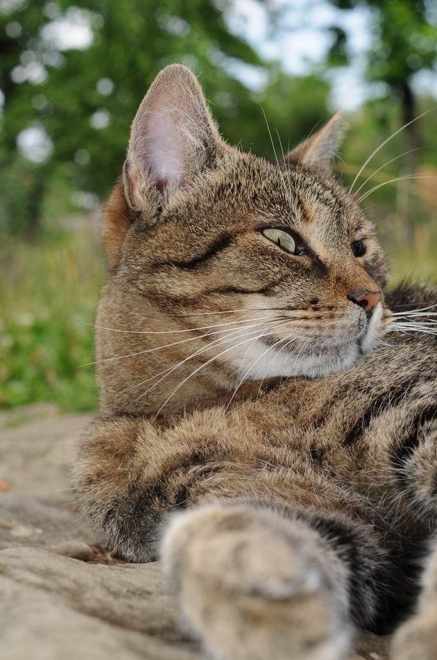 pisica - muzeul satului - foto lucian muntean _07