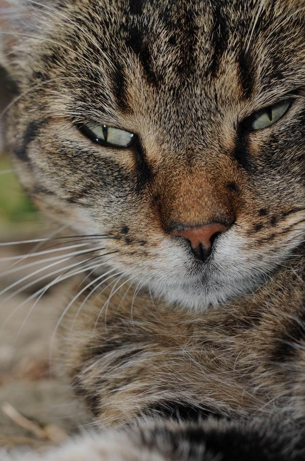 pisica - muzeul satului - foto lucian muntean _09