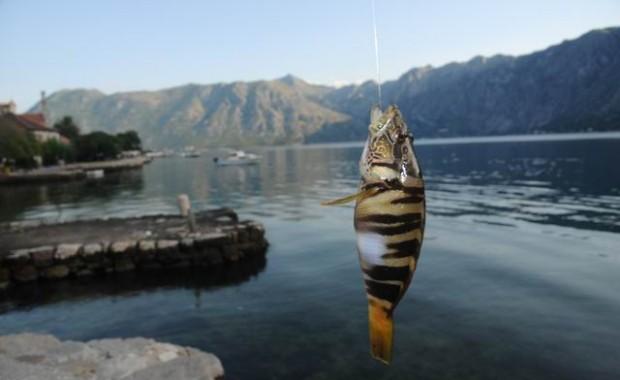 pescuit - kotor - muntenegru - foto lucian muntean 005