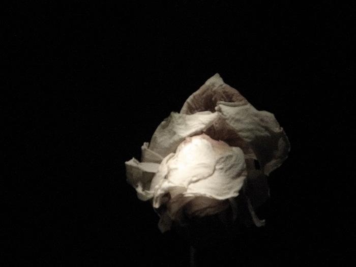 """Patricia Teodorescu """"ROSE – Breath"""" @ Galeria Calina, Timişoara"""