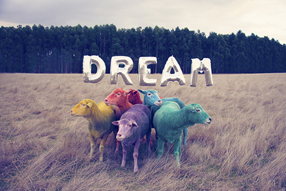 Gray Malin's Portraits Of Rainbow Colored Sheep Inspire Us To Dream
