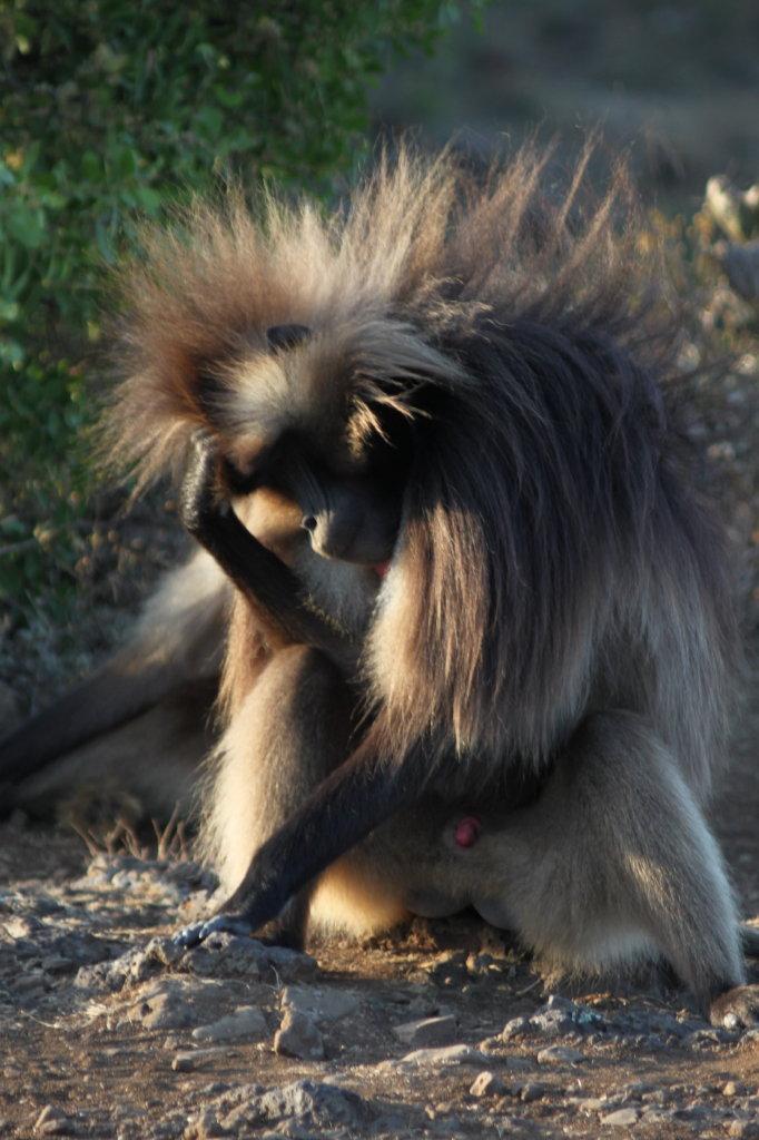 aurel tar - etiopia _12