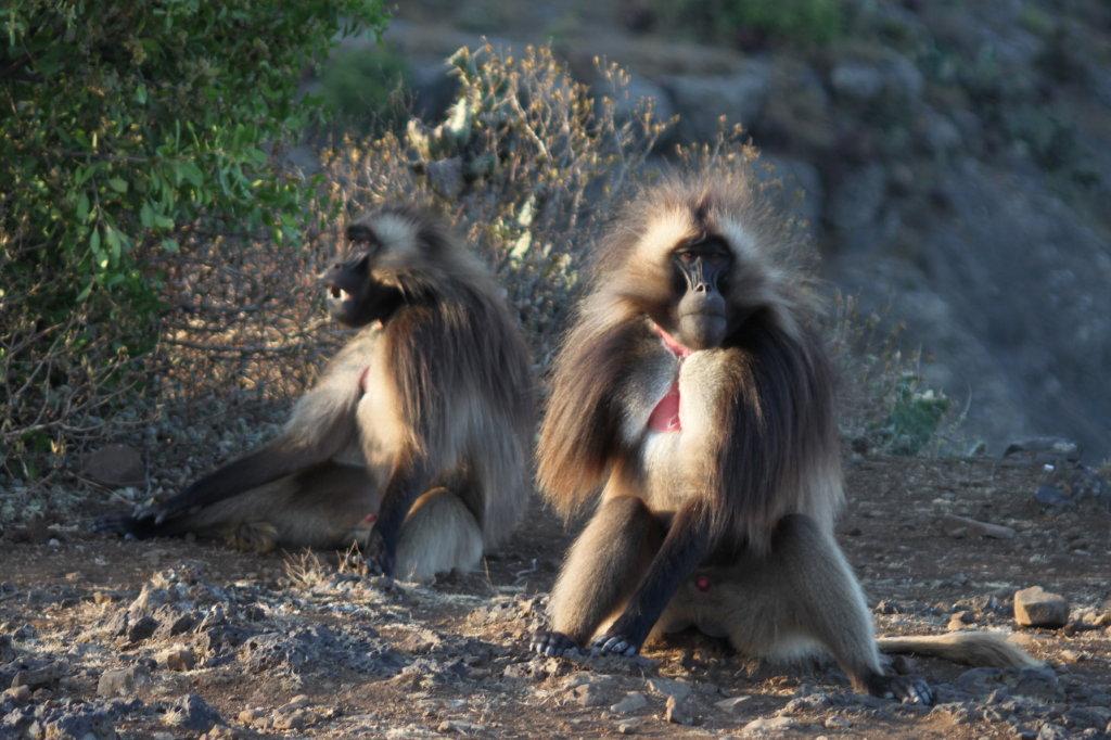 aurel tar - etiopia _13