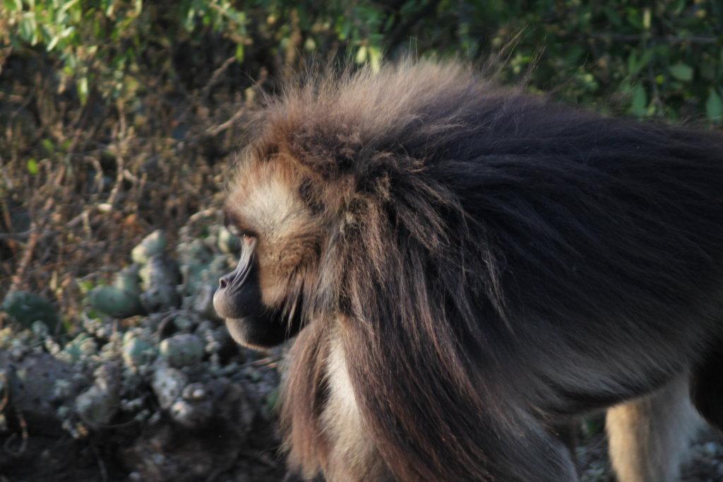aurel tar - etiopia _14