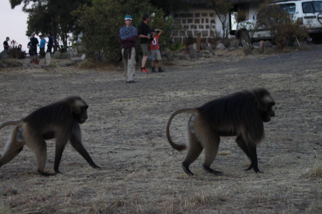 aurel tar - etiopia _16