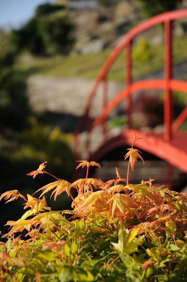 gradina botanica jibou - foto lucian muntean _0006