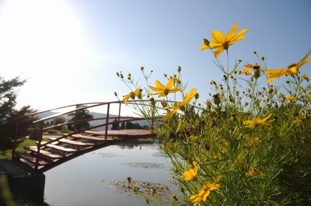 gradina botanica jibou - foto lucian muntean _0010