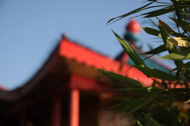 gradina botanica jibou - foto lucian muntean _0011